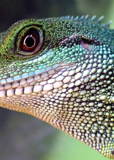 Clinica_animales_exoticos