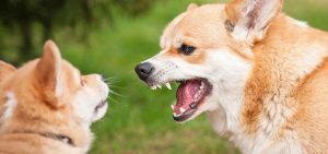 Dog aggressive behaviour