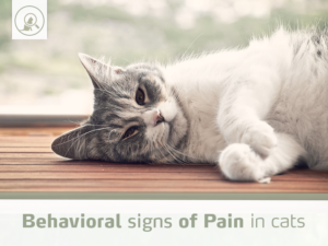 behavioral-signs-pain-cats