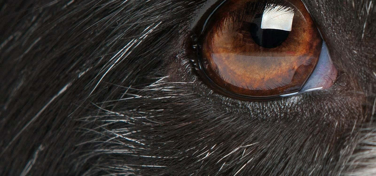 OPHT – PgC and GPCert Small Animal Ophthalmology