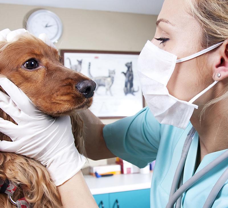 Bitesiz CPD - Nurses