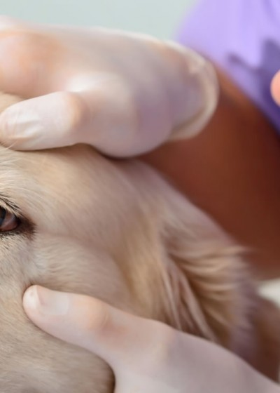 Eyelid and Corneal Surgery