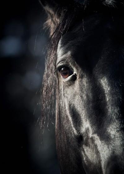 equine PGC 1600x750 v2