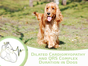 Dilated Cardiomyopathy and QRS Complex Duration in Dogs