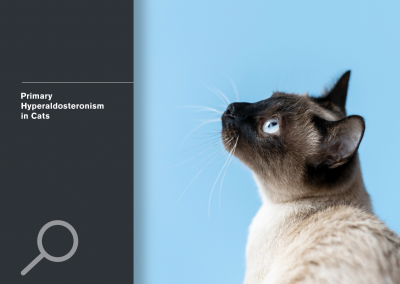 Primary Hyperaldosteronism in Cats