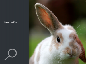 Rabbit welfare